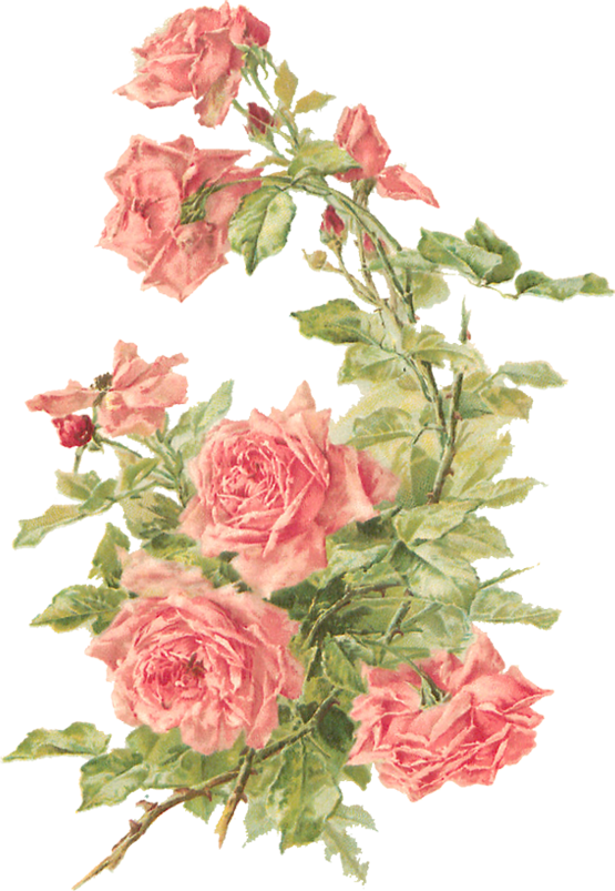 Wings of Whimsy: Peach Roses - Catherine Klein - PNG (transparent background) - free for personal use
