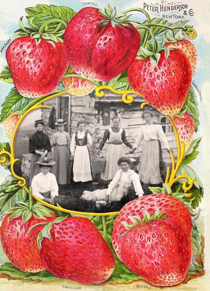 Wings of Whimsy: 1894 Henderson Farm Frame Petrine Wiik Collection #vintage #ephemera #freebie #printable #frame #seed  #catalog #petrine #wiik #collection