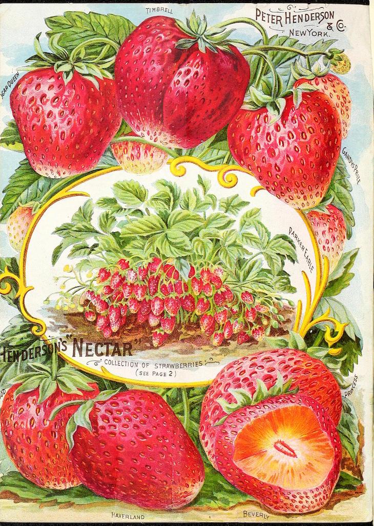 Wings of Whimsy: 1894 Henderson's Seed Catalog #vintage #ephemera #freebie #printable #seed #catalog #garden