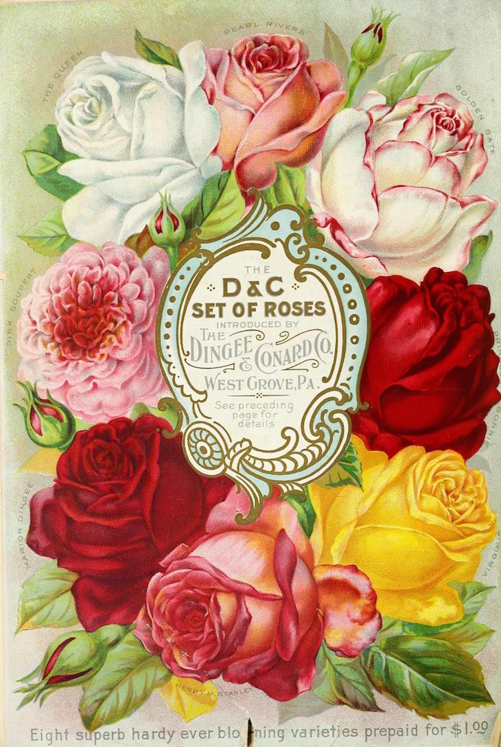 Wings of Whimsy: 1891Dingee Conard Seed Catalog #vintage #epehemera #freebie #printable #seed #catalog