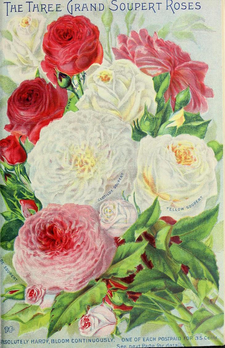 Wings of Whimsy: 1899 Dingee Conard Seed Catalog #vintage #epehemera #freebie #printable #seed #catalog