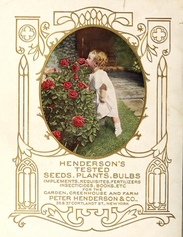 Wings of Whimsy: 1915 Henderson's Seed Catalog #vintage #epehemera #freebie #printable #seed #catalog