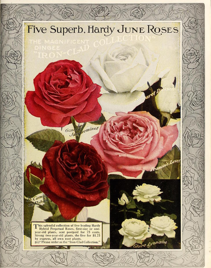 Wings of Whimsy: Antique Seed Catalogs Reinvented - 1915 Dingee Guide to Rose Culture #vintage #epehemera #freebie #printable #seed #catalog
