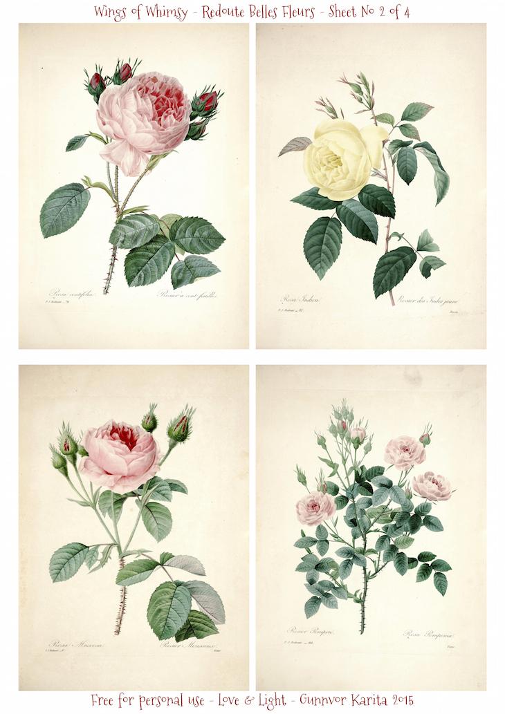 Wings of Whimsy: Redoute Belles Fleurs Sheet No 2 of 4 #vintage #ephemera #freebie #printable #redoute #roses