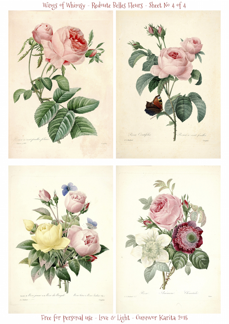 Wings of Whimsy: Redoute Belles Fleurs Sheet No 4 of 4 #vintage #ephemera #freebie #printable #redoute #roses