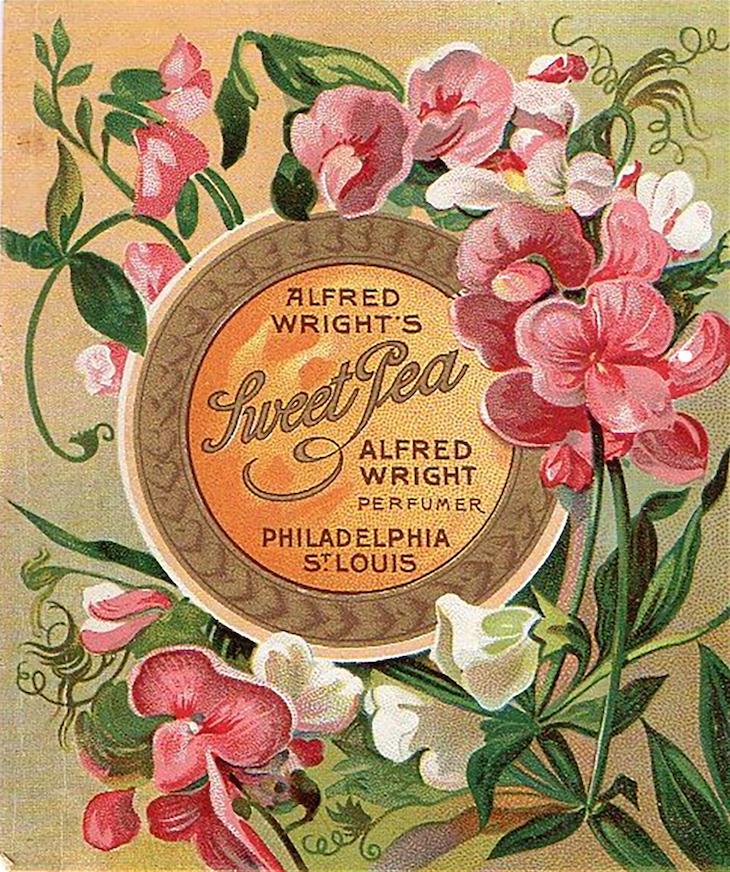 Wings of Whimsy: Sweet Pea Perfume Label #vintage #ephemera #freebie #printable